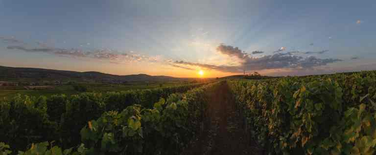 Balbronn Sunny Vineyard © Franck CHARLES - PAYSAGES