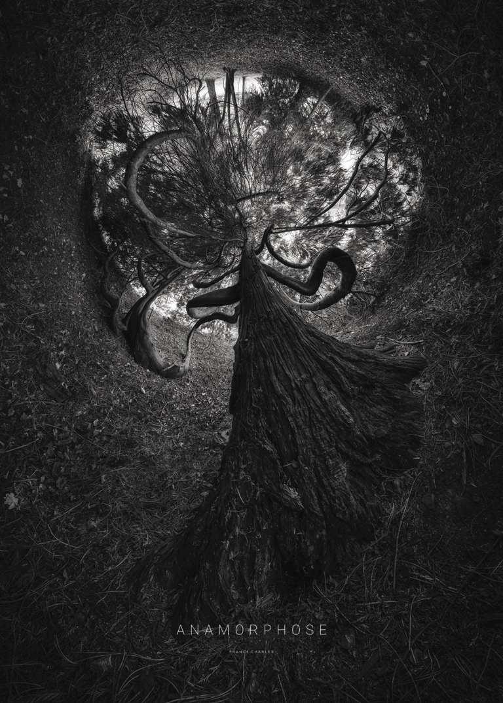 Monstro - ANAMORPHOSE © Franck CHARLES