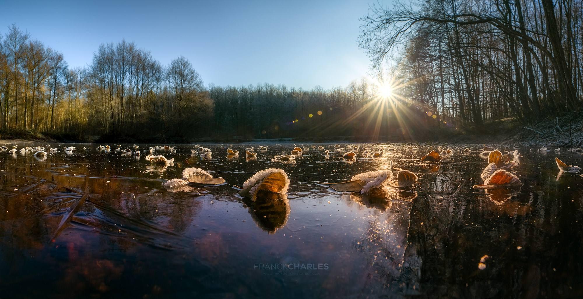 Winter Leaf - Franck CHARLES