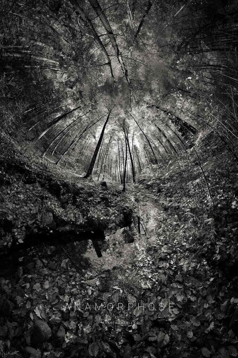 Le ruisseau - ANAMORPHOSE © Franck CHARLES