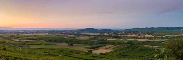 Wangen Vineyard  © Franck CHARLES