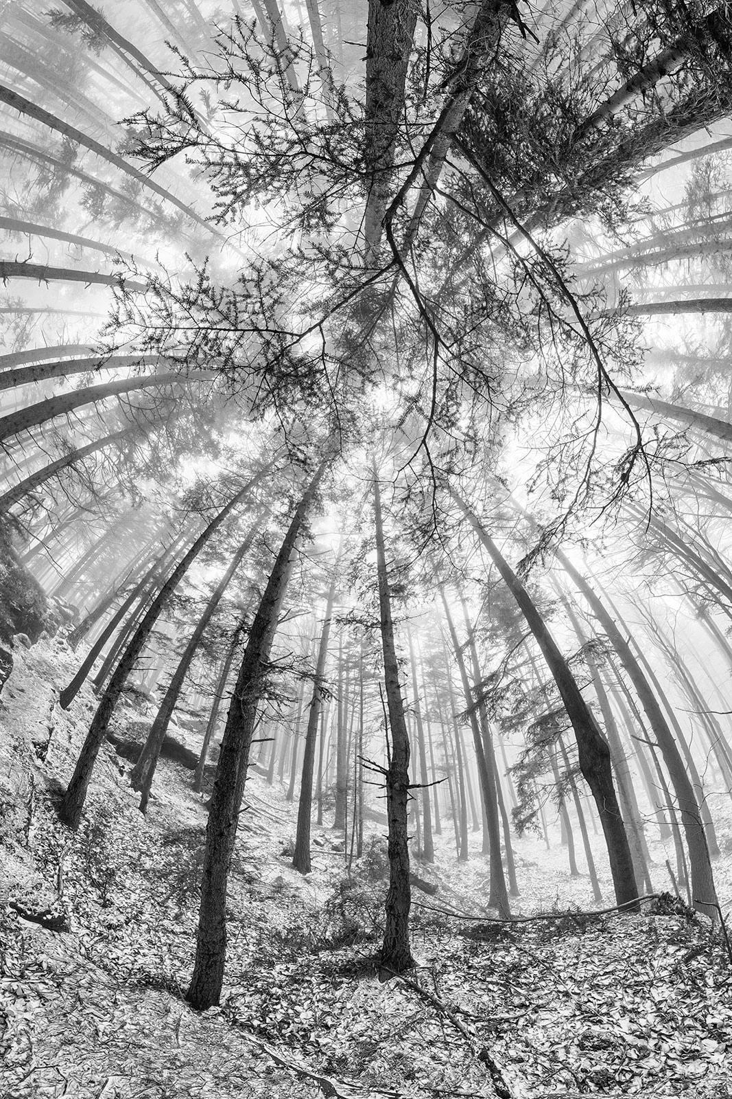 Blanc Manteau - ANAMORPHOSE © Franck CHARLES