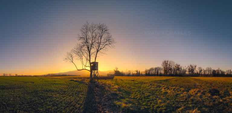 La cabane dans les arbres - Franck CHARLES