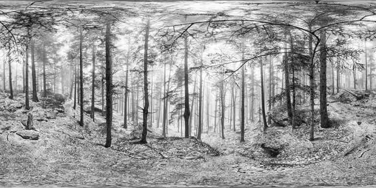 Forêt du Mont Sainte-Odile ~ Photographeauteur.com