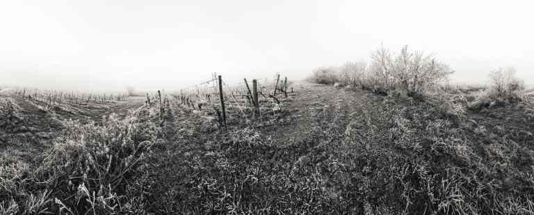 Winter Vineyard - Franck CHARLES