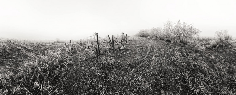 Winter Vineyard - Franck CHARLES