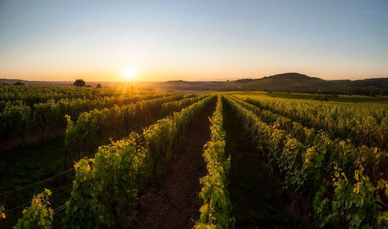 Vignoble de Traenheim © Franck CHARLES - PAYSAGES