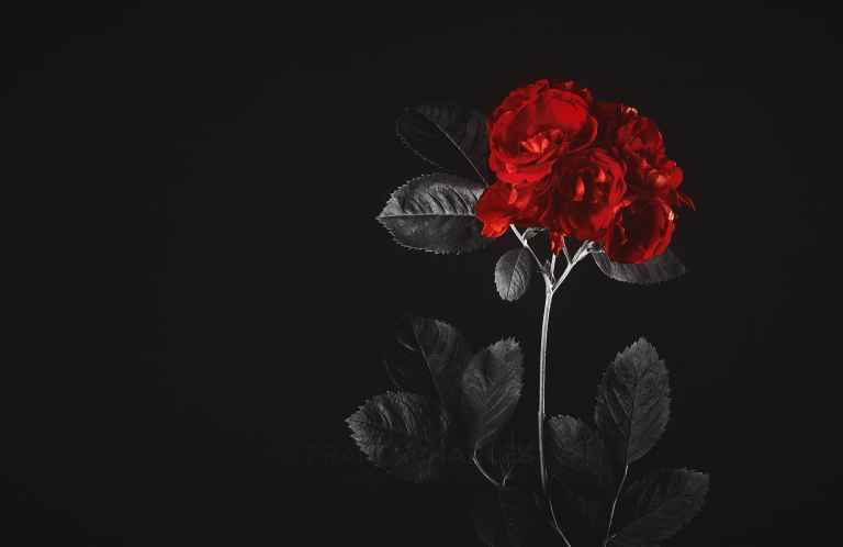 Black & Red - Franck CHARLES